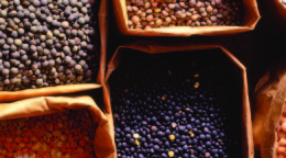 Zursun Lentils in Bags