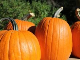 Pick a pumpkin at a local pumpkin patch!