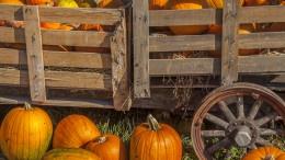 Pumpkins_Pace_003