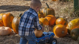 Pumpkins_Pace_006