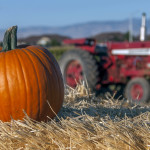 Pumpkin, Fall, Idaho, Farm, Pumpkin Patch